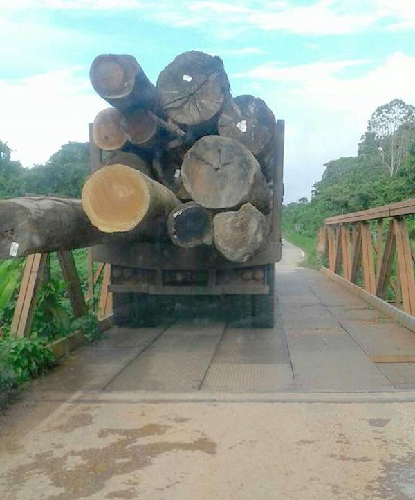 Elke dag bijna 25 trucks met hout uit Suriname